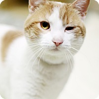 Adopt A Pet :: Enzo - Appleton, WI