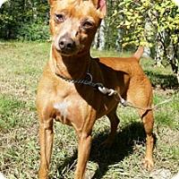 Adopt A Pet :: Popcorn - Canterbury, CT