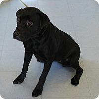 Adopt A Pet :: Wish - Allison Park, PA