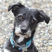 Adopt A Pet :: JINGLES - Linden, NJ