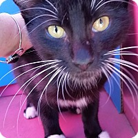 Adopt A Pet :: FELIX - Ocala, FL