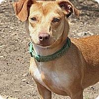 Adopt A Pet :: Hazel - Santa Barbara, CA