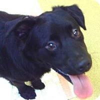 Adopt A Pet :: Lenny - Palm City, FL