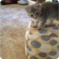 Adopt A Pet :: Mercury - Mobile, AL