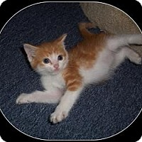 Adopt A Pet :: Aron - South Plainfield, NJ