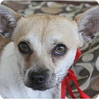 Adopt A Pet :: TOBY! - san diego, CA
