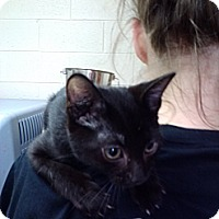 Adopt A Pet :: Skywalker - Willington, CT