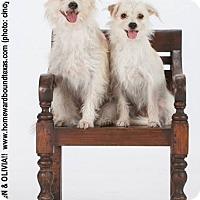Adopt A Pet :: Owen - Bedford, TX