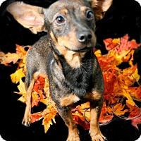 Adopt A Pet :: Nate - Lufkin, TX