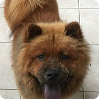 Adopt A Pet :: Kato - Marina del Rey, CA