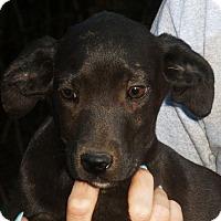 Adopt A Pet :: Champ - Pewaukee, WI