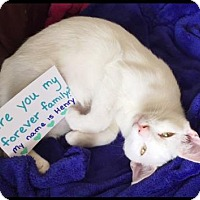 Adopt A Pet :: Henry Fussy - Orlando, FL
