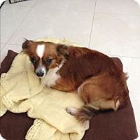 Adopt A Pet :: Simi - San Francisco, CA