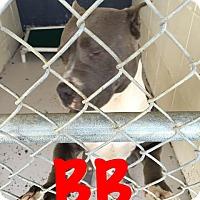 Adopt A Pet :: BB - Waycross, GA