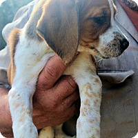 Adopt A Pet :: Roomba - Atlanta, GA