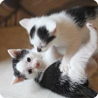 Adopt A Pet :: Larry - Dalton, GA