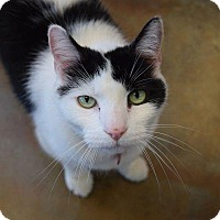 Adopt A Pet :: Hexel - Denver, CO