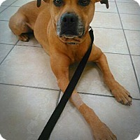 Adopt A Pet :: Ainsley **Courtesy Post** - Elburn, IL