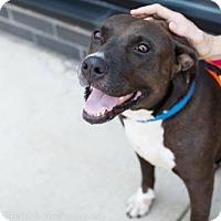 Adopt A Pet :: Delta Burke - Brooklyn, NY