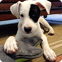 Adopt A Pet :: Swim Team Pup - Madeline - San Diego, CA