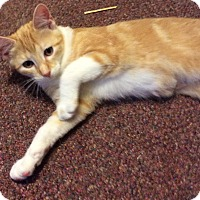Adopt A Pet :: Mango - Mt Pleasant, PA
