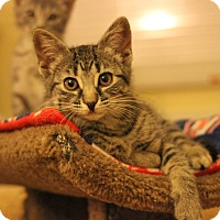 Adopt A Pet :: Hope - Carlisle, PA