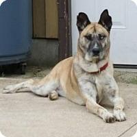 Adopt A Pet :: Sierra - Adoption Pending -Congrats Lauren & Scott - Baltimore, MD