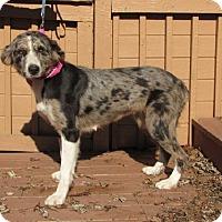 Adopt A Pet :: Cutie - Oakland, AR