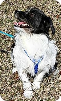 Terrier (Unknown Type, Medium) Mix Dog for adoption in Houston, Texas - Blackjack