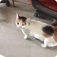 Adopt A Pet :: FIONA - Glendale, AZ