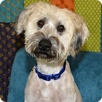 Adopt A Pet :: Beasley - Abilene, TX