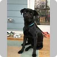 Adopt A Pet :: Colton - Pittsboro, NC