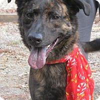 Adopt A Pet :: Roxi - Voorhees, NJ