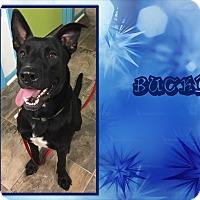 Adopt A Pet :: Bucky - Ringwood, NJ