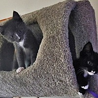 Adopt A Pet :: Bruce & Bob - Burbank, CA