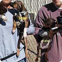Adopt A Pet :: 4Kpups - Palmdale, CA
