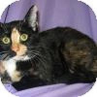 Adopt A Pet :: Carina - Powell, OH