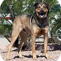 Adopt A Pet :: Bruno (paired with Blitz) - Santa Fe, NM