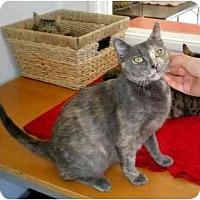 Adopt A Pet :: Angel - El Cajon, CA