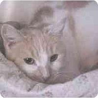 Adopt A Pet :: Ginger #2 - Lunenburg, MA