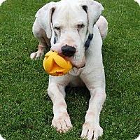 Adopt A Pet :: Manny - Manassas, VA
