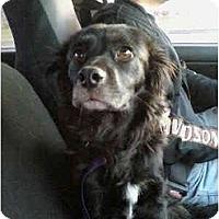 Adopt A Pet :: Willow - Tacoma, WA