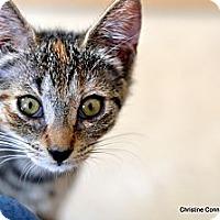 Adopt A Pet :: Jupiter - Island Park, NY