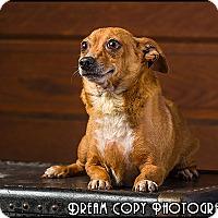Adopt A Pet :: Dixie - Owensboro, KY