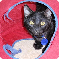 Adopt A Pet :: George - Temecula, CA