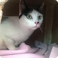 Adopt A Pet :: Spotty - Newport Beach, CA