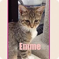 Adopt A Pet :: Emme - Warren, OH