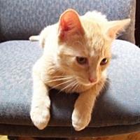 Adopt A Pet :: Flynn - St. Charles, IL