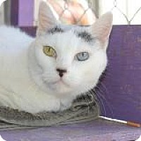 Adopt A Pet :: Rollie - El Cajon, CA