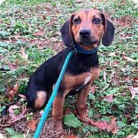 Adopt A Pet :: Spanky - Waldorf, MD